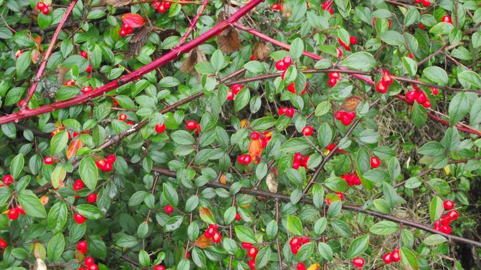 La Murta : Más que un antioxidante…